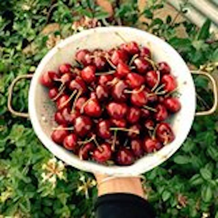 Eldorado Orchards